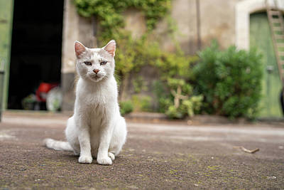 Photograph - White Cat In The Backyard by Giuseppe Lombardo
