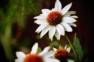 Vintage Diner Cars - White Coneflower by Diana Matlock