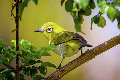 Royalty-Free and Rights-Managed Images - White Eye  by Brian Knott Photography