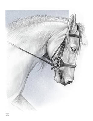 Drawings Rights Managed Images - White Horse Royalty-Free Image by Greg Joens