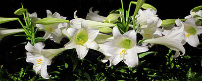Photograph - White Lilies by Crystal Wightman