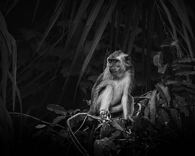 1-war Is Hell Royalty Free Images - White Monkey on Tree Branch Royalty-Free Image by Celestial Images