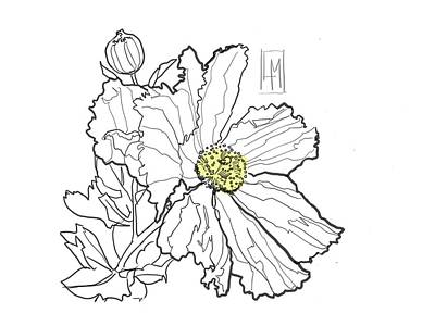 Black And White Ink Illustrations - White Poppy by Luisa Millicent