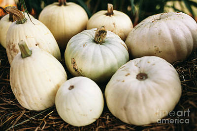 Have A Cupcake - White pumpkins lying on hay. Halloween and Thanksgiving by Michal Bednarek
