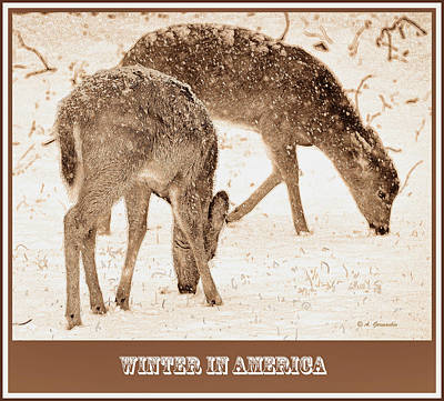 Animal Portraits - White-tailed Deer in Snow  by A Macarthur Gurmankin