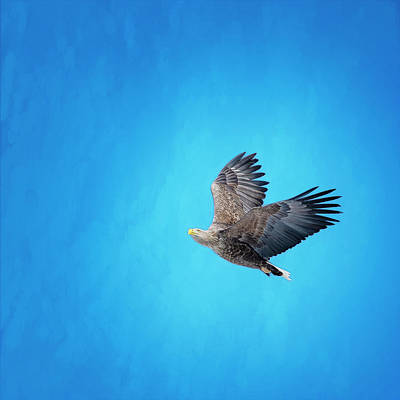 Featured Tapestry Designs - White Tailed Eagle Hokkaido Japan by Joan Carroll