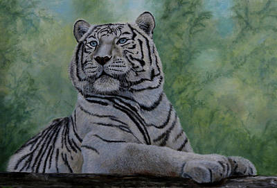 Painting - White Tiger by Jan Priddy
