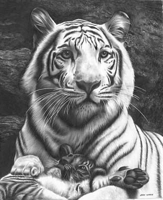 Animals Drawings - White Tiger by Jerry Winick