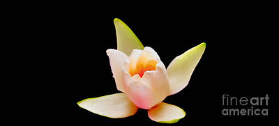 Digital Art - White water lily by Chris Bee Photography
