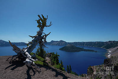 Royalty-Free and Rights-Managed Images - Whitebark Pine, Crater Lake by Michael Ver Sprill