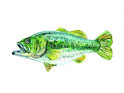 Animal Portraits - Large Mouth Bass by Luisa Millicent