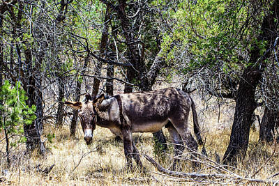 Sean Rights Managed Images - Wild Donkey 001327 Royalty-Free Image by Renny Spencer