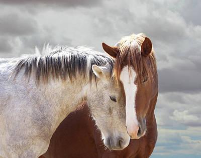 Photograph - Wild Horse Loves by Barbara Sophia Travels