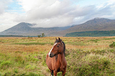 Photograph - Wild Horse of Mourne by Darren Forde