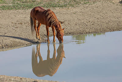 Curated Beach Towels - Wild Horse Reflection by Tony Hake