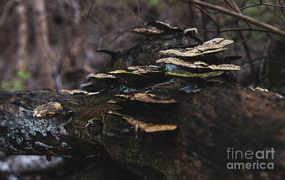 Thomas Kinkade - Wild Mushrooms on Tree by Wesley Farnsworth