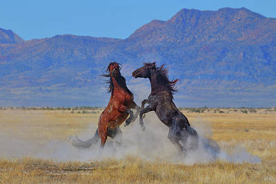 Photograph - Wild Stallion Dust Up by Greg Norrell