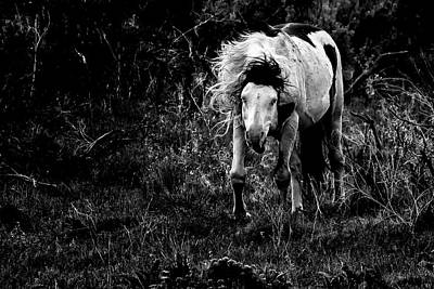 Wild Weather - Wild Thing - South Steens Herd bw by Belinda Greb