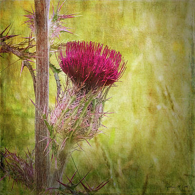 Animal Portraits - Wild Thistle in South Carolina by Bellesouth Studio