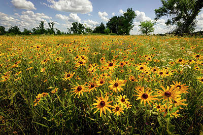Scott Bean Rights Managed Images - Wildflower Field Royalty-Free Image by Scott Bean