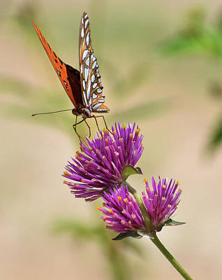 Tina Turner - Wildflower Nectar by D Whitson