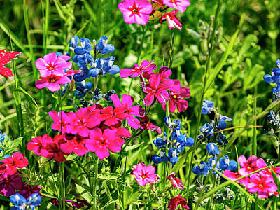 Purely Purple - Wildflowers  by Jerry Connally
