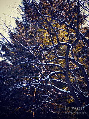 Frank J Casella Royalty-Free and Rights-Managed Images - Winter-fold Branches by Frank J Casella