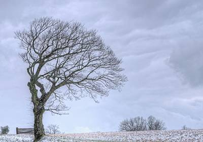 Cartoons Tees - Windswept Tree against a Grey Sky 2 by Douglas Barnett