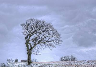 Cartoons Tees - Windswept Tree against a Grey Sky by Douglas Barnett