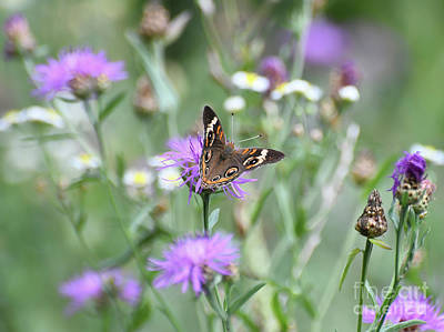 Anne Geddes Collection - Wings in the Wildflowers - Common Buckeye Butterfly by Kerri Farley