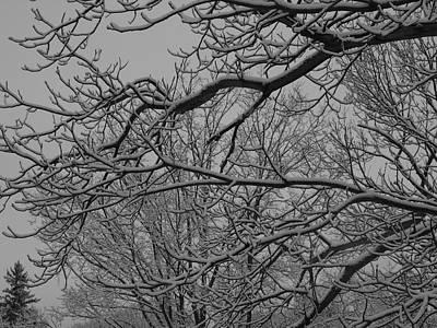 Water Droplets Sharon Johnstone - Winter 4 by Jeffrey Peterson
