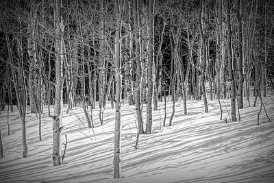 Photograph - Winter Aspen Patterns by Douglas Wielfaert
