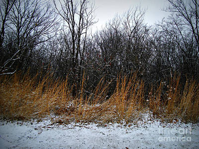 Frank J Casella Royalty-Free and Rights-Managed Images - Winter Beauty in the Woods by Frank J Casella