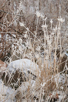 Science Tees Rights Managed Images - Winter Brown Weeds with Frost Royalty-Free Image by Carol Groenen