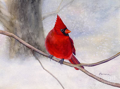Nighttime Street Photography - Winter Cardinal by Hailey E Herrera