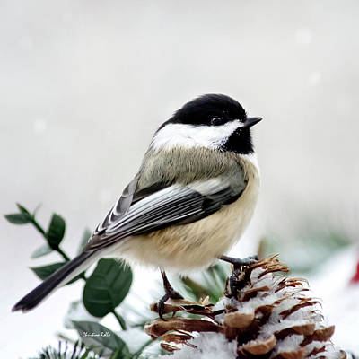 Animals Photos - Winter Chickadee Square by Christina Rollo