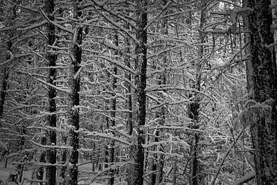 Photograph - Winter Forest by Thomas Nay