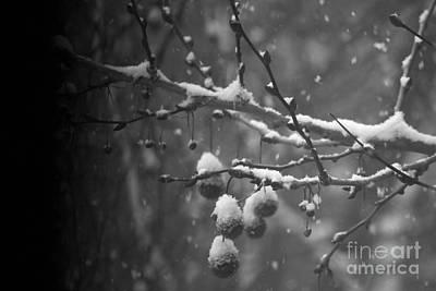 Mellow Yellow - Winter by Ili