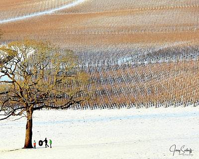 Jerry Sodorff Royalty-Free and Rights-Managed Images - Winter In The Vineyard DS by Jerry Sodorff