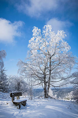 Photograph - Winter Light by Philippe Sainte-Laudy