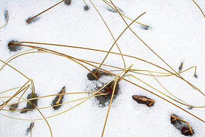 Photograph - Winter Marsh by Carl Simmerman