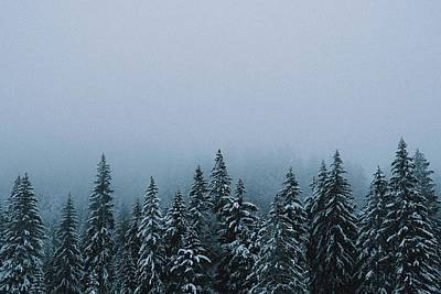 Royalty-Free and Rights-Managed Images - winter misty forest - green pine tree covered with snow - Jura, France by Julien