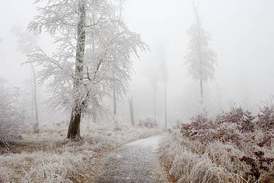 Movies Star Paintings - Winter Path by Ren Kuljovska