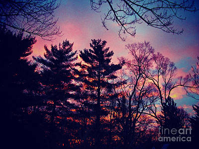 Frank J Casella Royalty-Free and Rights-Managed Images - Winter Sunrise Through Silhouetted Pines by Frank J Casella