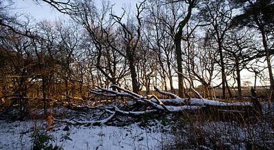 Photograph - Winter the Beautiful by Elena Perelman