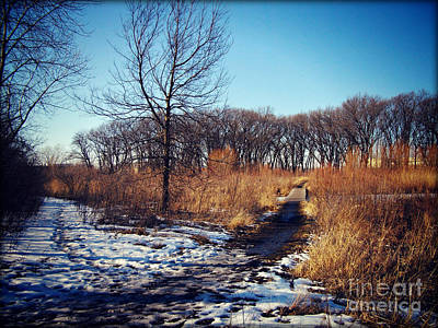 Frank J Casella Royalty-Free and Rights-Managed Images - Winter Trail Golden Hour by Frank J Casella