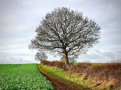 Caravaggio - Winter Tree Early 2021 by Gordon James