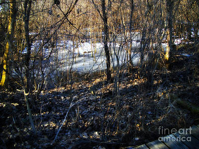 Frank J Casella Royalty-Free and Rights-Managed Images - Winter Wetlands by the Trail by Frank J Casella