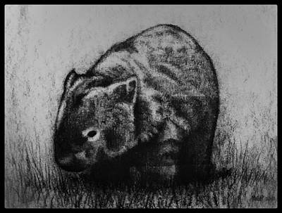 Animals Drawings - Wombat W/ Border by Michael Panno