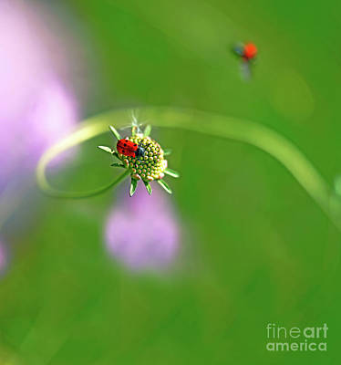 Animals Royalty-Free and Rights-Managed Images - Wonders of nature 1 - Insects of Catalonia, Spain by ParaKrytous P